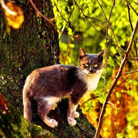 cat, tree, climbing