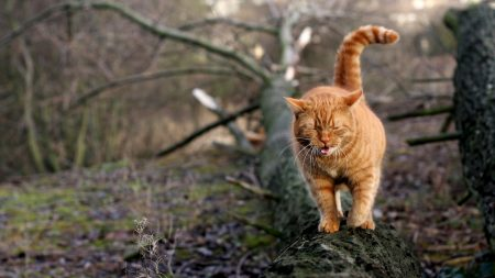 cat, walk, log