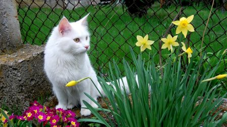 cat, white cat, flowers