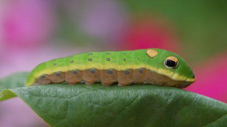 caterpillar, leaves, climbing