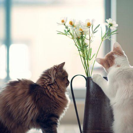 cats, couple, vase
