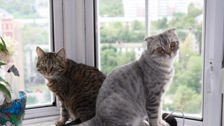 cats, couple, window sill