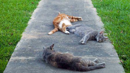 cats, grass, lie down
