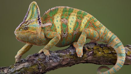 chameleon, crawl, color