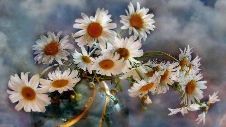 chamomile, flowers, bouquets