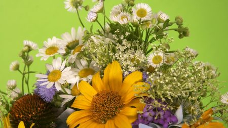 chamomile, flowers, different