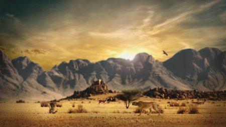 cheetah, savanna, hunting
