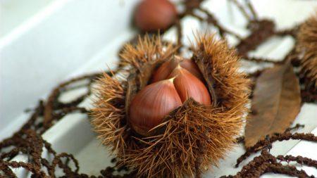 chestnuts, walnuts, autumn