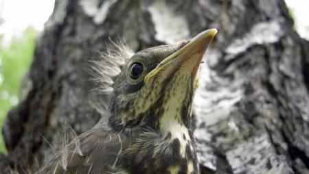 chick, bird, tree