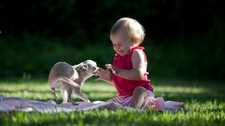 child, dog, laughter