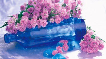 chrysanthemum, flowers, bottle
