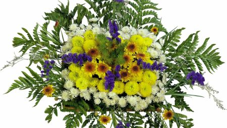 chrysanthemum, flowers, composition