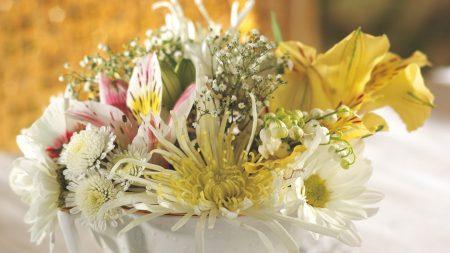 chrysanthemum, lily, landysh