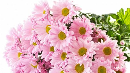 chrysanthemum, rose, bouquet