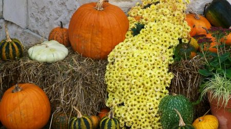 chrysanthemums, flowers, pumpkins