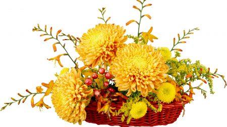 chrysanthemums, flowers, song