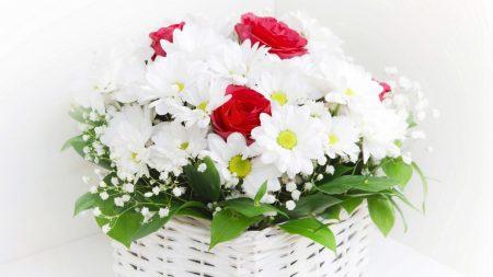 chrysanthemums, roses, gypsophila