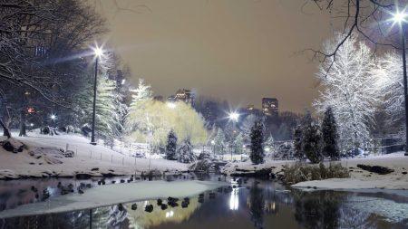 city??, park, trees
