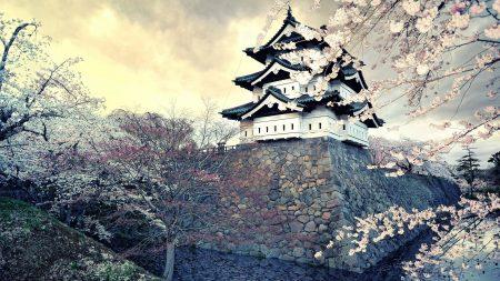 city, sakura, japan
