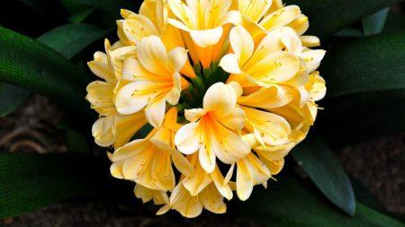 cleave, flower, flowering
