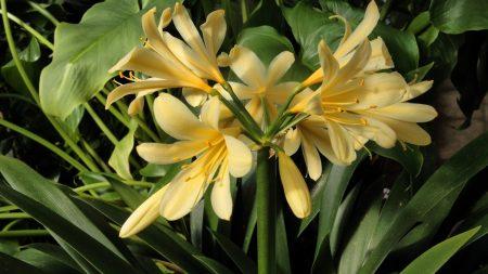 cleave, flower, stamen