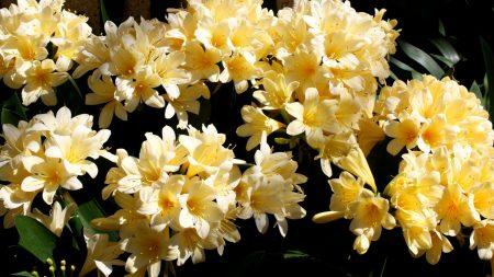 cleave, flowers, tender