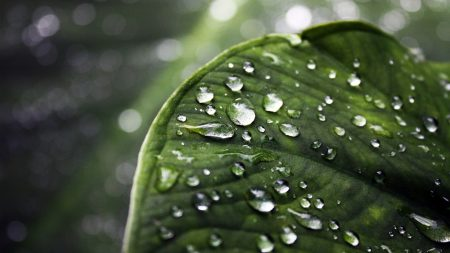 close-up, drop, water