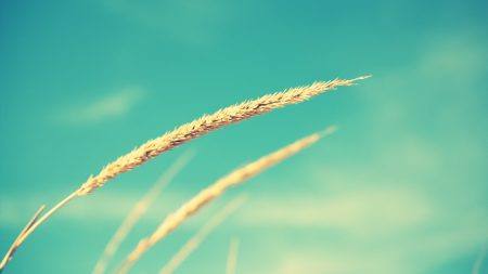 close-up, grass, against the sky