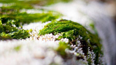 close-up, grass, snow