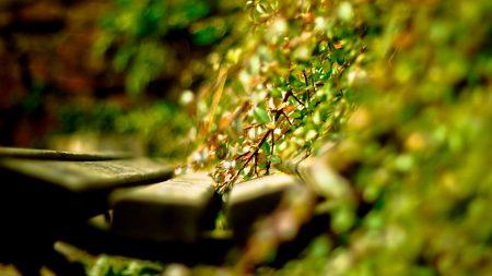 close-up, grass, timber
