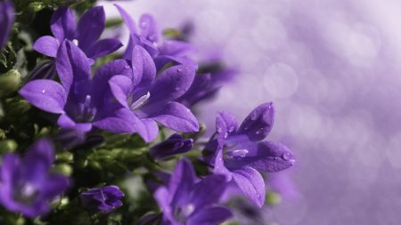 close-up, purple, flower