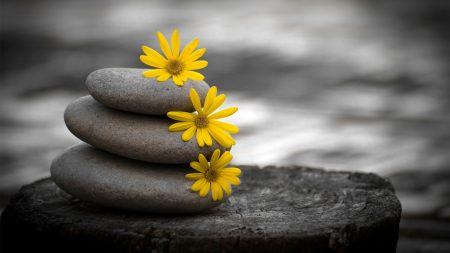 close-up, stones, flowers