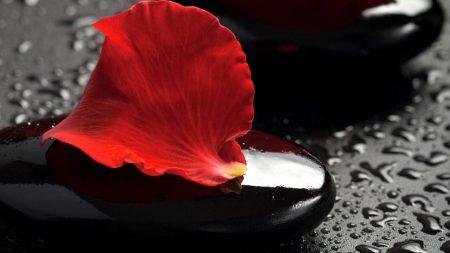 close-up, stones, petals