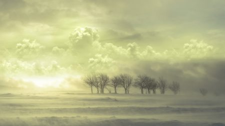clouds, fog, trees