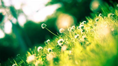 clover, field, spring