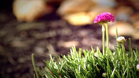 clover, grass, flowers