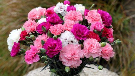 cloves, bouquet, vase