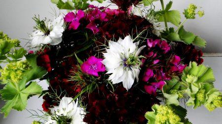 cloves, color, composition