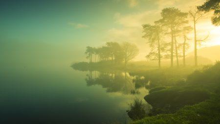 coast, trees, fog