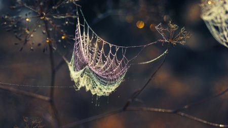 cobwebs, branches, shadows