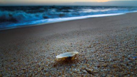 cockleshell, coast, sand
