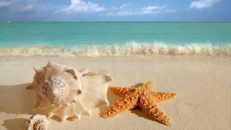 cockleshells, starfish, sinks