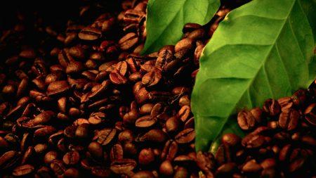 coffee, grains, leaves