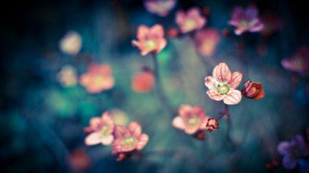 color, background, blur