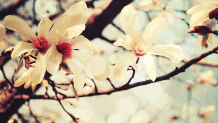 color, branch, spring