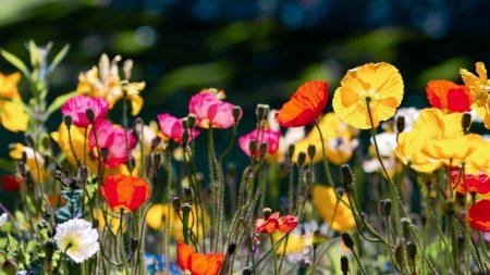 color, meadow, bright