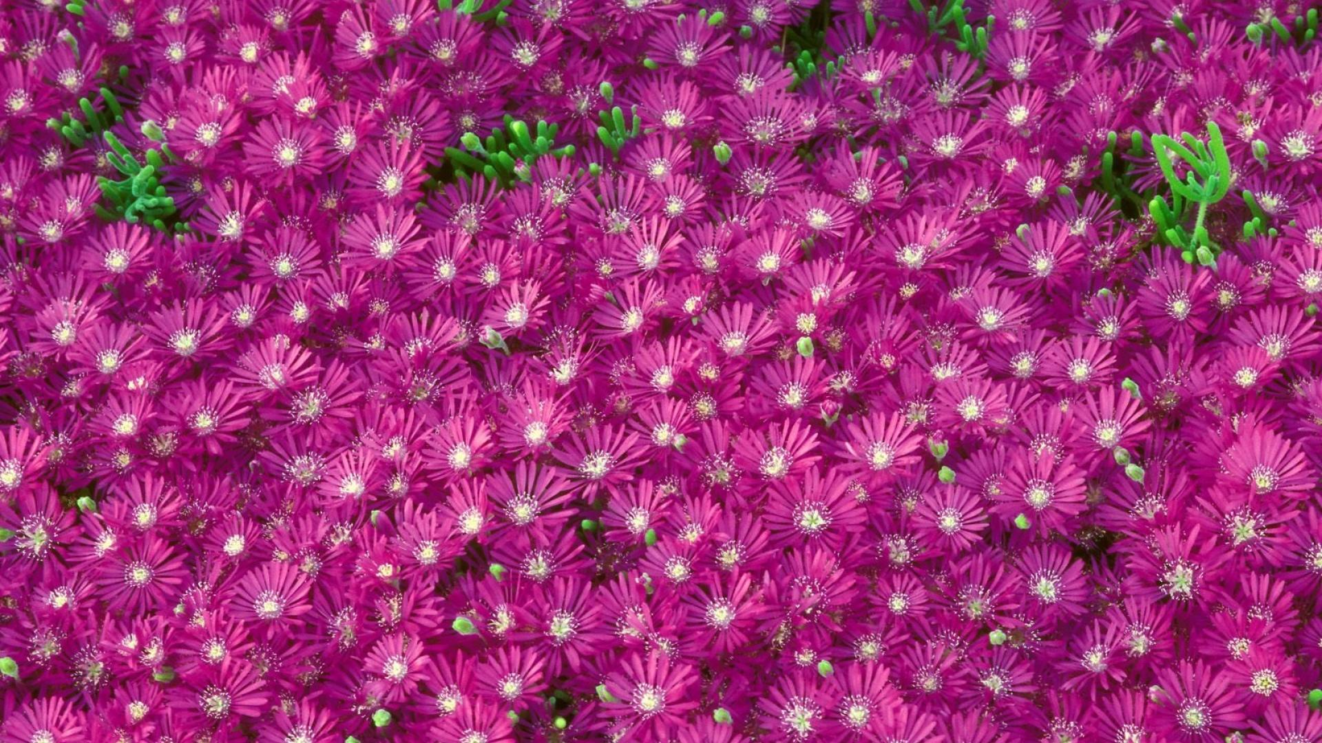 Download Wallpaper 1920x1080 Colors Carpet Small Bright Full Hd 1080p Hd Background
