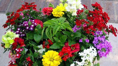 colors, composition, pots