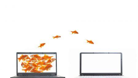 computer, fish, white