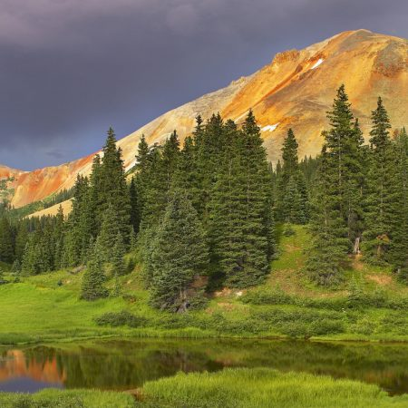 coniferous forest, mountains, cloudy